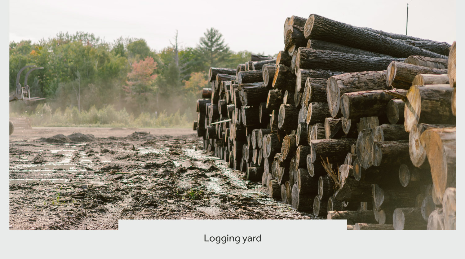 timberthane process logging yard