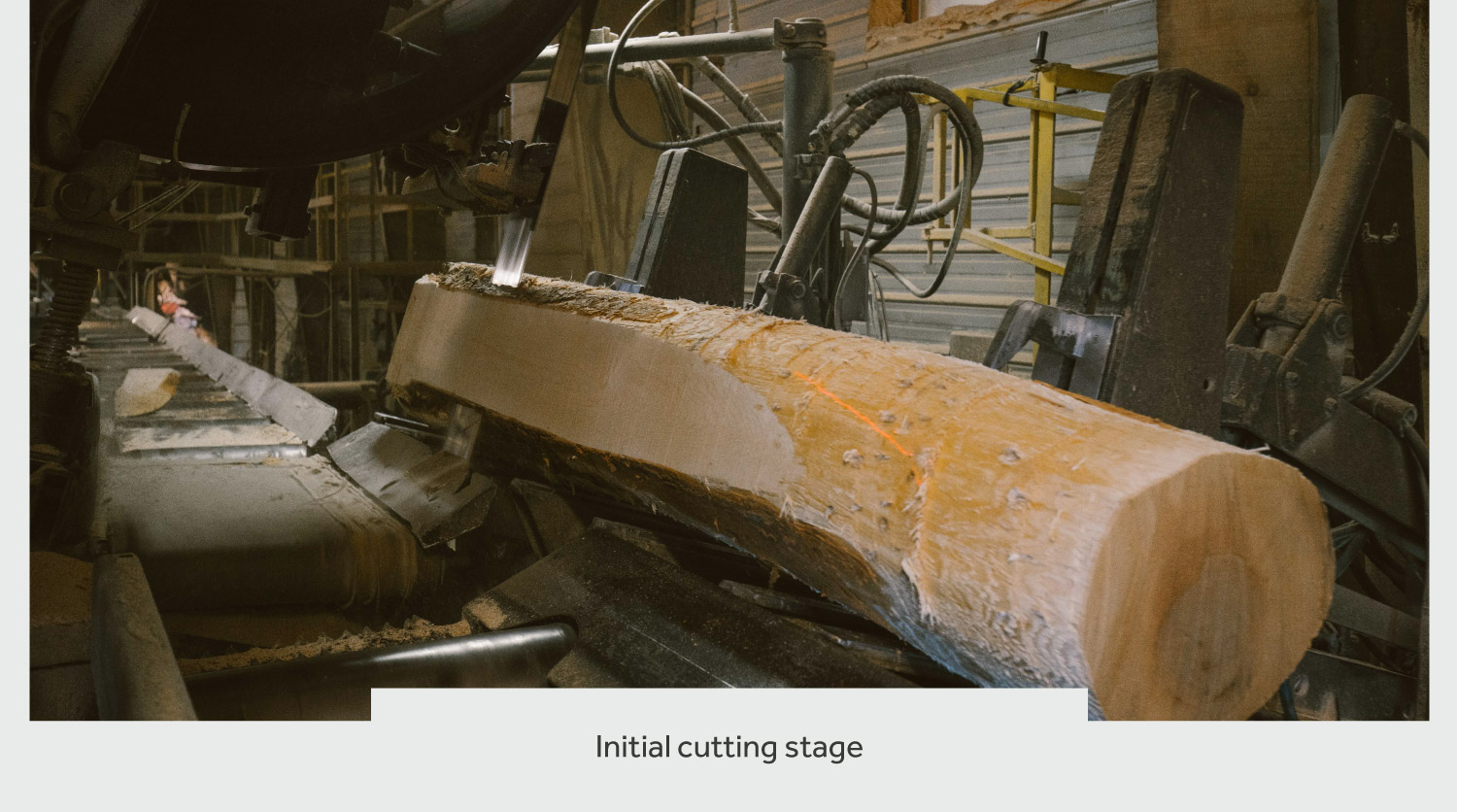 timberthane process cutting